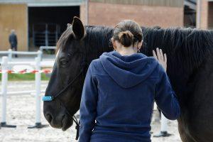liderazgo con caballos 300x200 - Metodología para el cambio