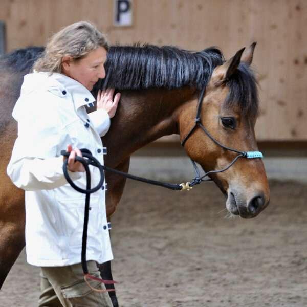 coaching con caballos para equipos barcelona 600x600 - Team Building con Caballos: Presencia, Cooperación y Propósito.