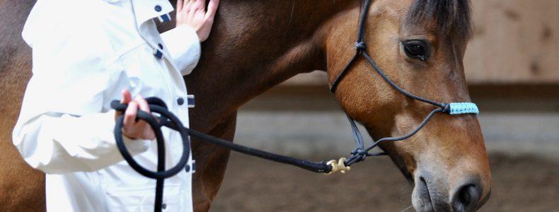 coaching con caballos para equipos barcelona