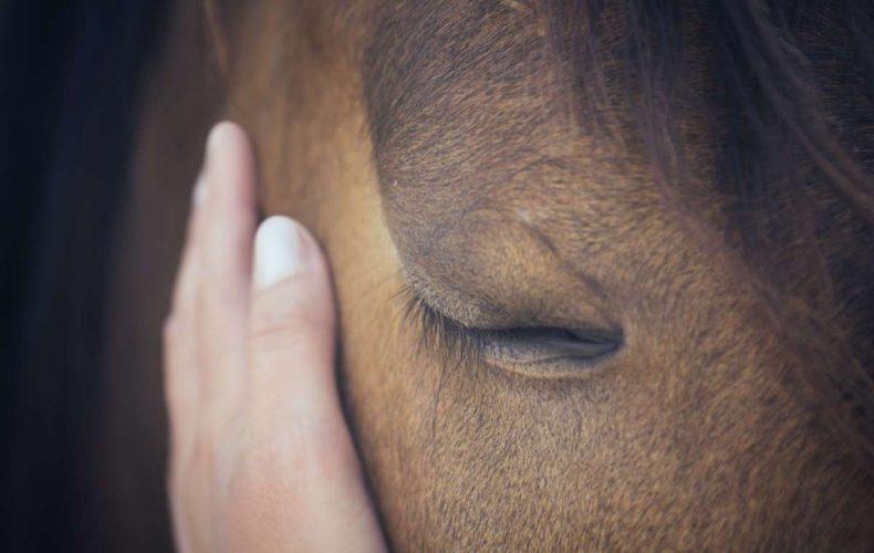 coaching con caballos reduccion del estres barcelona