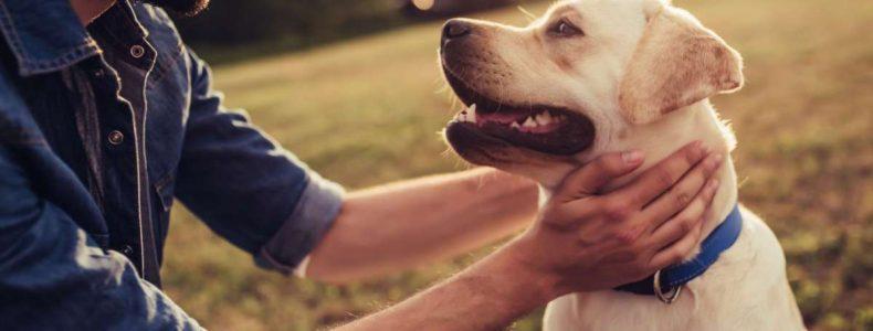 coaching con perros madrid